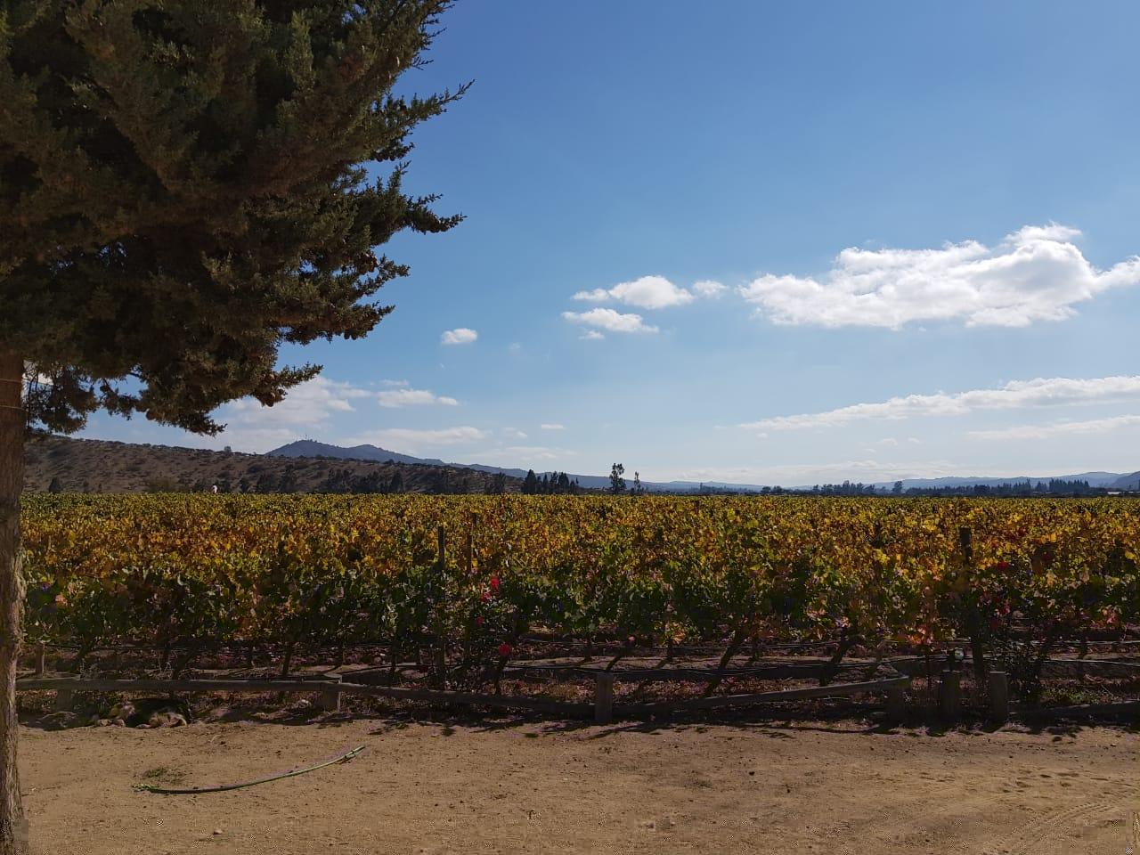 Passeios de verão em Santiago do Chile na vinícola veramonte