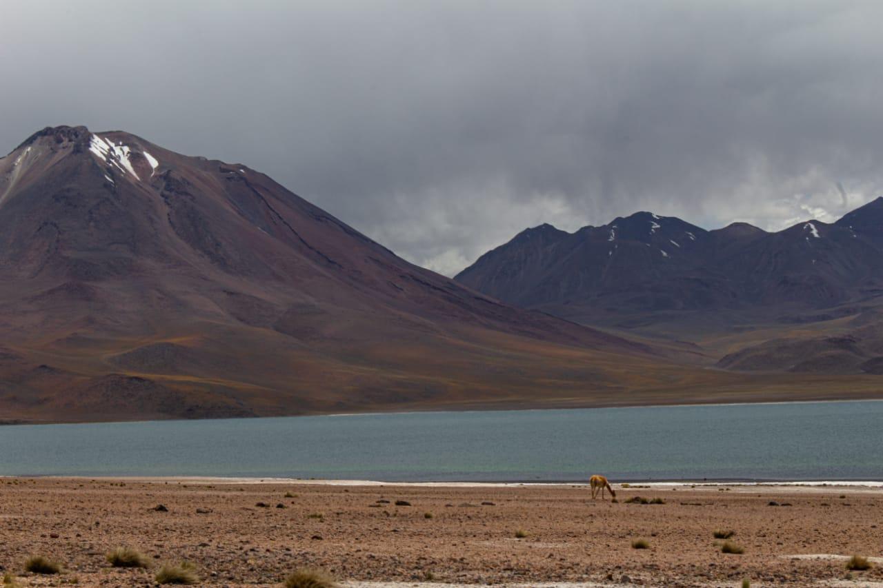 Laguna Miscanti no Deserto do Atacama no passeio Lagunas Altiplânicas..